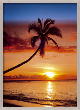 Sunset & palm tree Poster
